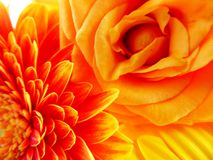 Abstract composition of orange flowers. An abstract composition of roses and gerbera flowers in shades of orange colors royalty free stock photo