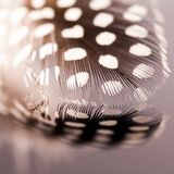 Abstract composition with feather Royalty Free Stock Photo