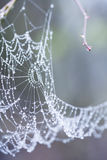 Abstract composition with water drops, spiderwebs and bokeh Royalty Free Stock Photo