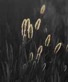 Abstract composition with wild grass Stock Image
