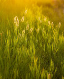 Abstract composition with wild grass Royalty Free Stock Image