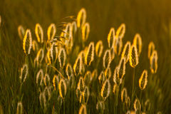 Abstract composition with wild grass Stock Photo