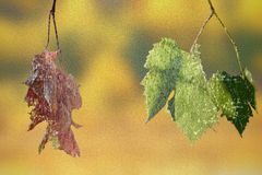 Abstract concept of life and death with leaves. Abstract concept of life and death with faded and green vineyard  leaves, distressed layers resembling old Stock Photography