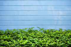 Abstract concrete wall and plant. Abstract of blue concrete wall Stock Photography