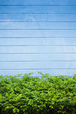 Abstract concrete wall and plant. Abstract of blue concrete wall Royalty Free Stock Photos