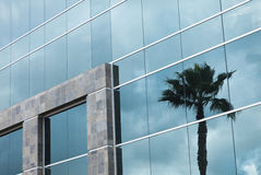 Abstract Corporate Building with Palm Tree Reflection stock photo