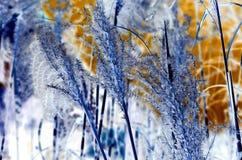 Abstract Cortaderia selloanain Stock Photo