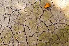 Abstract crack texture of dry soil Royalty Free Stock Images