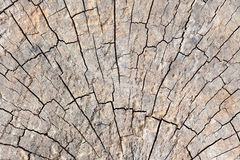 Abstract crack wood Stock Photography