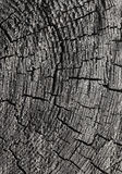 Abstract cracked wood Royalty Free Stock Photography