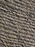 Abstract cracked wood Stock Photo