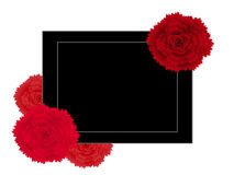 Abstract creative banner with flowers red carnation. Abstract creative banner with flowers red carnation, beautiful illustration Stock Image