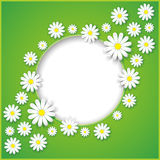 Abstract background with flower camomile Stock Image