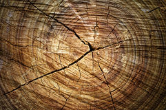 Abstract cross-section wood. Abstract crack wood Stock Images