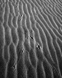 Abstract Of Crossing Bird Tracks On Sand B&W. Black and white abstract of crossed bird tracks on rippled sand. Vertical format royalty free stock image