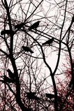 Abstract Crows Background Stock Photos