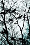 Abstract Crows Background Royalty Free Stock Photography