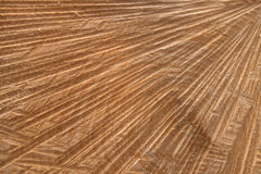 Abstract cut surface of a tree trunk Stock Images
