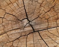 Abstract of a cut tree trunk Royalty Free Stock Photos
