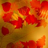 Abstract cute autumnal background  Royalty Free Stock Images