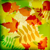 Abstract cute autumnal background vector Royalty Free Stock Image