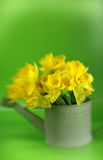 Abstract Dafodils Royalty Free Stock Photo