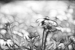 Abstract Daisies Stock Photo