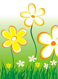 Abstract daisies illustration. Yellow and white daisies with grass Stock Photography