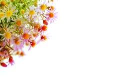 Abstract Daisy Royalty Free Stock Photo