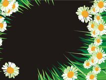 Abstract daisy background Royalty Free Stock Photos