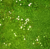 Abstract daisy field background Stock Photography