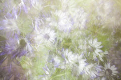 Abstract Daisy Floral Background Royalty Free Stock Images