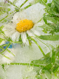 Abstract of daisy flower Royalty Free Stock Images