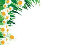Abstract daisy illustration Royalty Free Stock Images