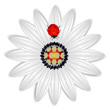 Abstract daisy with a red ladybug on a white background. Stock Image