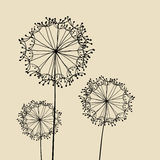 Abstract Dandalions background. Floral Elements for design, dandelions. EPS10 Vector illustration Royalty Free Stock Photography