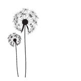 Abstract Dandelion Background Vector Illustration. EPS10 Stock Images