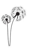 Abstract Dandelion Background Vector Illustration Royalty Free Stock Photos