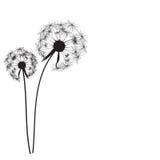 Abstract Dandelion Background Vector Illustration. EPS10 royalty free illustration