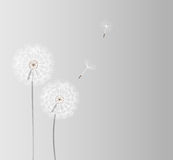 Abstract dandelion background vector illustration Stock Images
