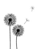 Abstract dandelion background vector illustration Stock Photography