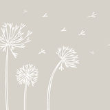 Abstract Dandelion Background with white flowers on beige background.
