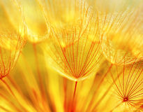 Abstract dandelion flower background stock image