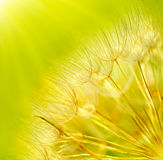 Abstract dandelion flower background Stock Photography