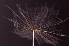 Abstract dandelion flower background, extreme closeup. Big dandelion Stock Images