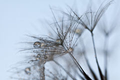 Abstract dandelion flower background, extreme closeup. royalty free stock photography