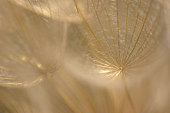 Abstract dandelion seed Stock Photo