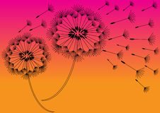 Abstract dandelions silhouettes background Royalty Free Stock Photo