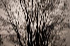 Abstract dark forest Royalty Free Stock Photography