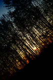 Abstract dark forest silhuette Stock Photos
